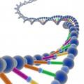 БАД на основе пептидных биорегуляторов